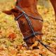 Autumn Horse Care Essentials to Know