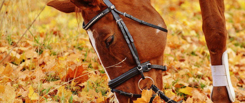 Autumn Horse Care Essentials to Know