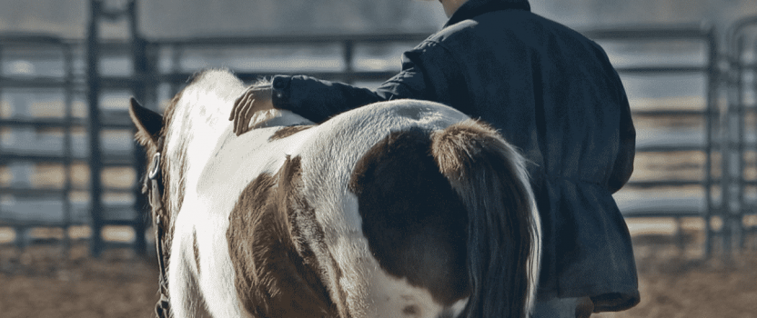 How to Find the Perfect Horse Trainer