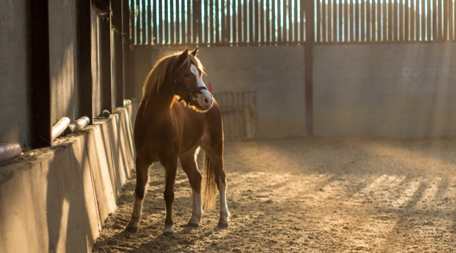 What You Need to Know About Weaning Your Foal