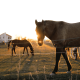 Central Kentucky's Treasure Trove of Horse Fun