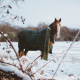 Winter Horse Care Fundamentals