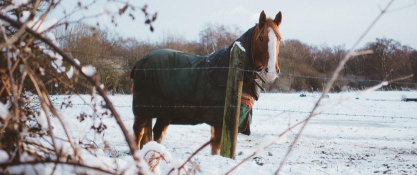 Winter Horse Care Fundamentals