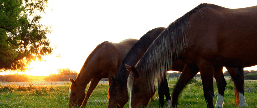 Nutrition Basics and Key Supplements for Your Horse