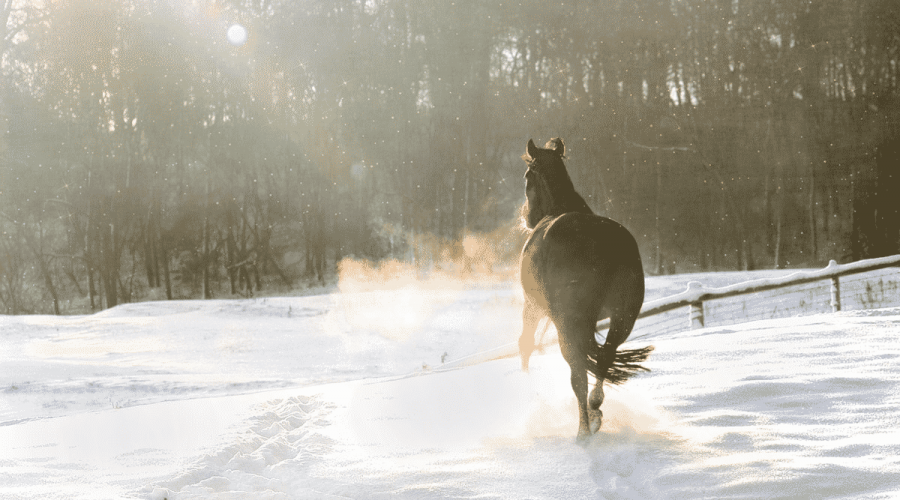 Your Horse Needs Exercise This Winter