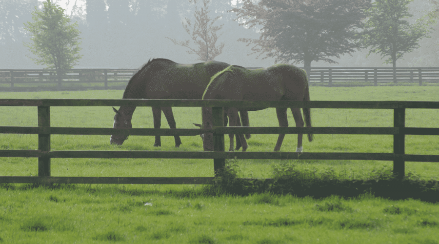 Bright Future for Keeneland's January Horses of All Ages Sale