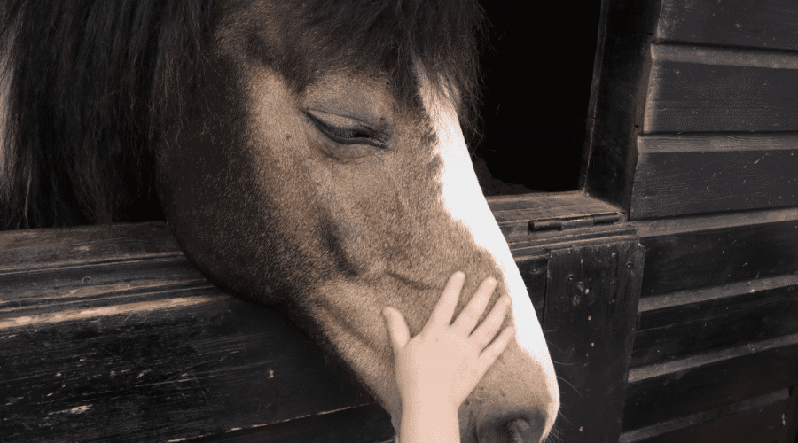 A Sampling of Equine Industry Trends