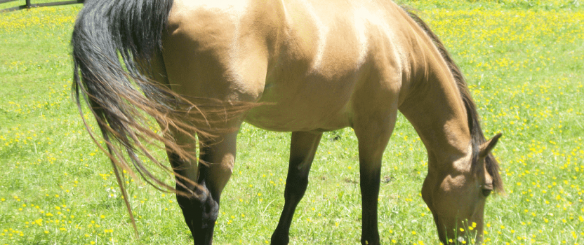 New Study Sheds Light on Unwanted Horse Problem